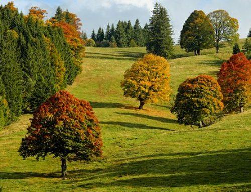 Leaf peeper fall foliage forays