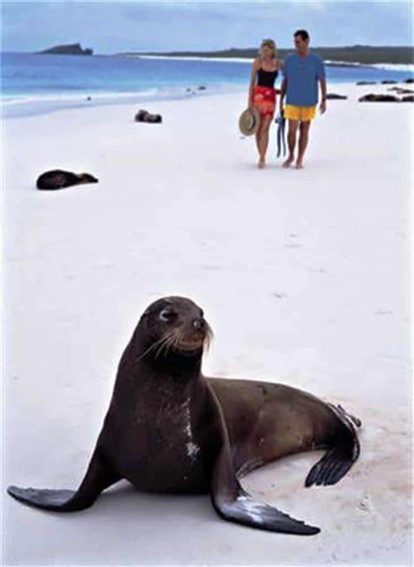 Silversea saving the Galapagos