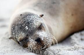 Silversea in the Galapagos